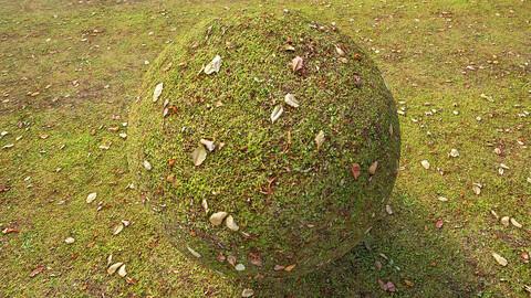 Grass (279) - Photogrammetry based Environment Texture