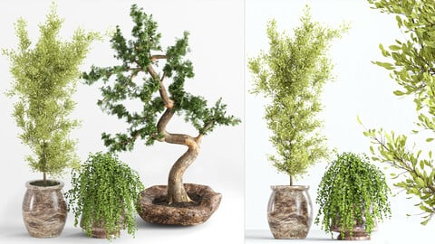 indoor plant collection002
