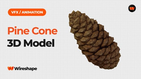 Pine Cone - Extreme Definition 3D Scanned