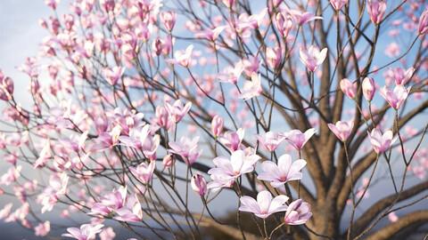 XfrogPlants Saucer Magnolia - Magnolia Soulangeana