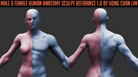 Female & Male Human Anatomy zbrush Sculpt reference by Hong Chan Lim(bundle pack)