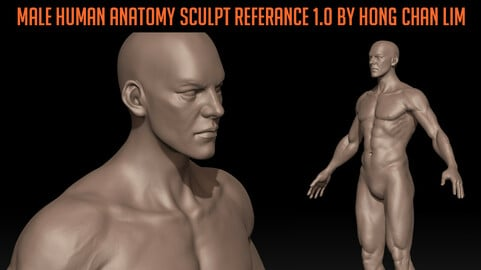 Male Human Anatomy zbrush Sculpt reference by Hong Chan Lim