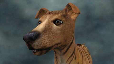 MDGH.010 Rigged Dog