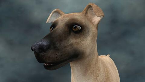 MDGH.019 Rigged Dog