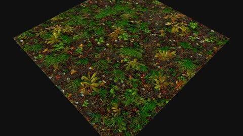 Forest Ground (Texture)