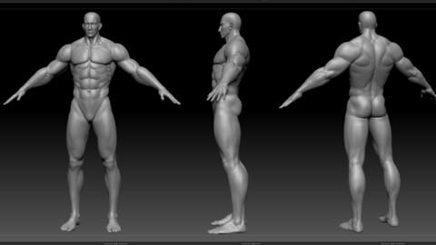 Muscle man  Fitness male basic model