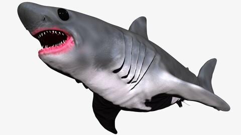 Baby Shark Set -Sculpt