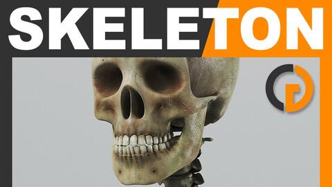 Human Textured Skeleton - Anatomy