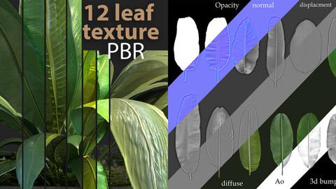 12 leaf banana texture  PBR