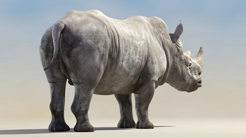Big White Rhino Rigged