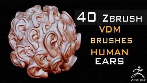 40 Zbrush VDM Human Ears Brushes + Alpha + FBX + OBJ