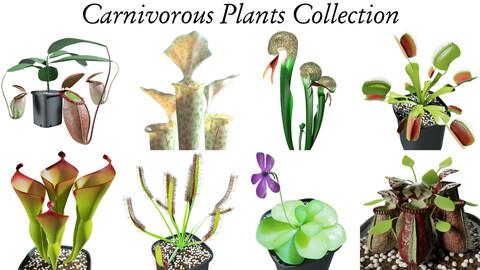 3D Carnivorous Plants Collection