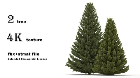 set of Spruce pine - 2 tree (quad mesh)
