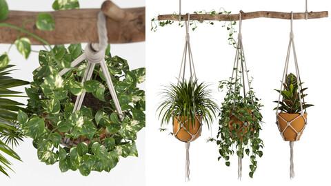 Indoor Plants Set 01-Hanging Plants with macrame