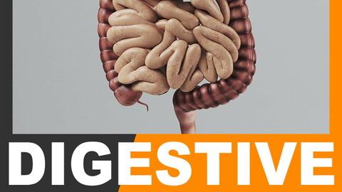 Human Digestive System - Anatomy