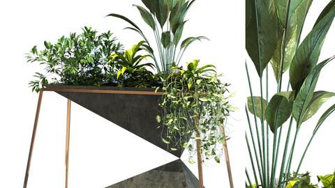 plant in box set 091