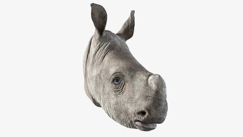 Rhino Baby Head
