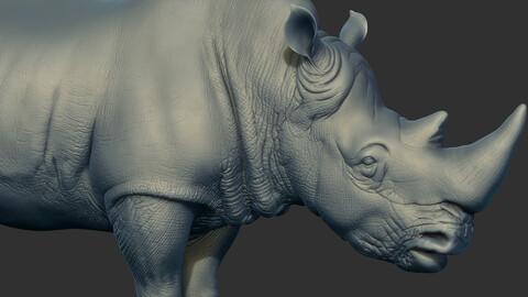 Rhino Sculpt