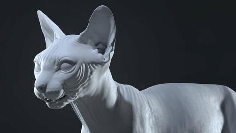 Sphynx Cat Sculpt