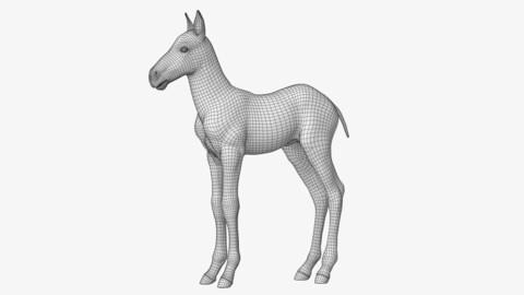 Horse Foal Lowpoly
