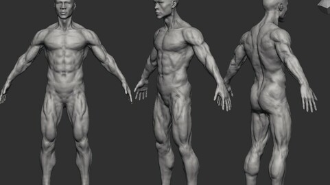 Male Body Young, Medium Density for a good start in ZBRUSH 2021.6