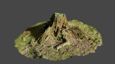 Tree Stump 3 - Photoscan