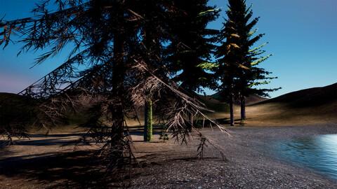 Spruce tree Pack UE5-4