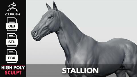 Realistic Horse - Sculpt