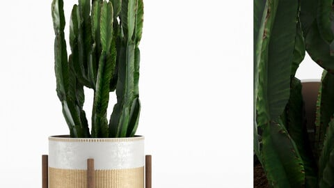Decorative Vase_ 435_004