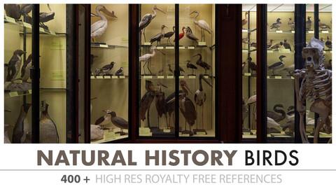 Natural History Museum - Birds