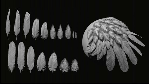 Red-Tailed Hawk Feathers IMM