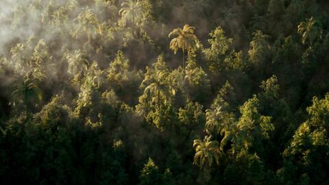 Forest scene(C4D)