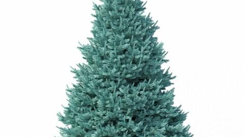 Tree - Abies No 1