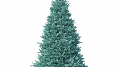 Tree - Abies No 2