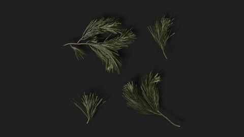 Coniferous Branches