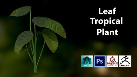 Stylize Leafy Tropical Plant