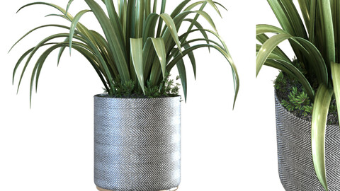 plant in vase set 107