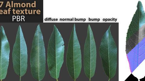 7 PBR texture of almond leaf