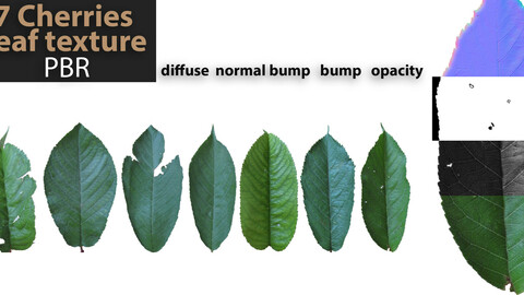 7 PBR texture of cherries   leaf