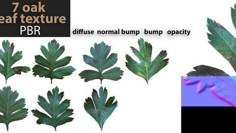 7 PBR texture of oak leaf