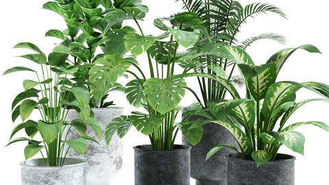 plants set 03