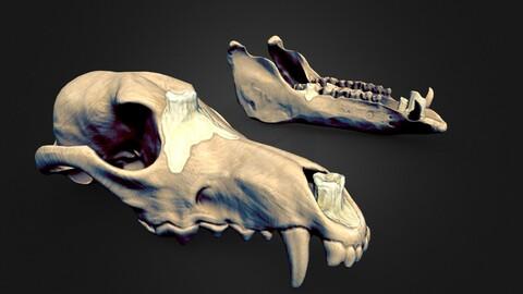 Stylized Skull / Jaw