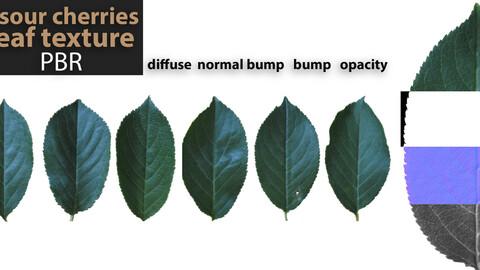 7 PBR texture of sour cherries leaf