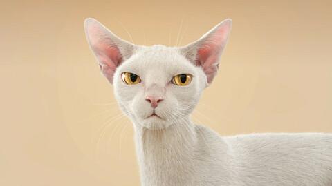 Cat White Fur Shorthair Rigged XGen Core