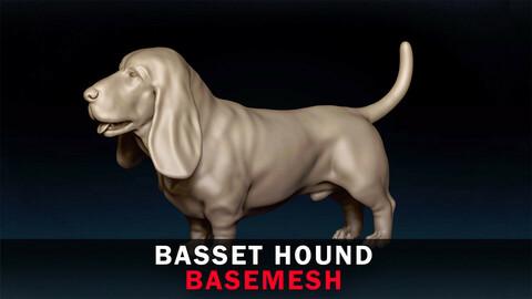 Basset Hound Basemesh 3D model