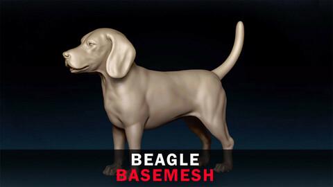Beagle Basemesh 3D model