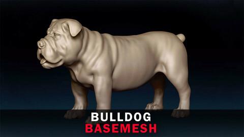 Bulldog Basemesh 3D model