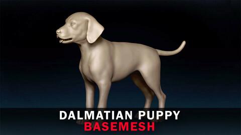 Dalmatian Puppy Basemesh 3D model