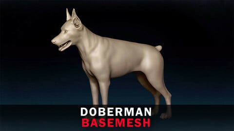 Doberman Basemesh 3D model