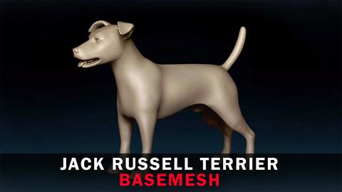 Jack Russell Terrier Basemesh 3D model
